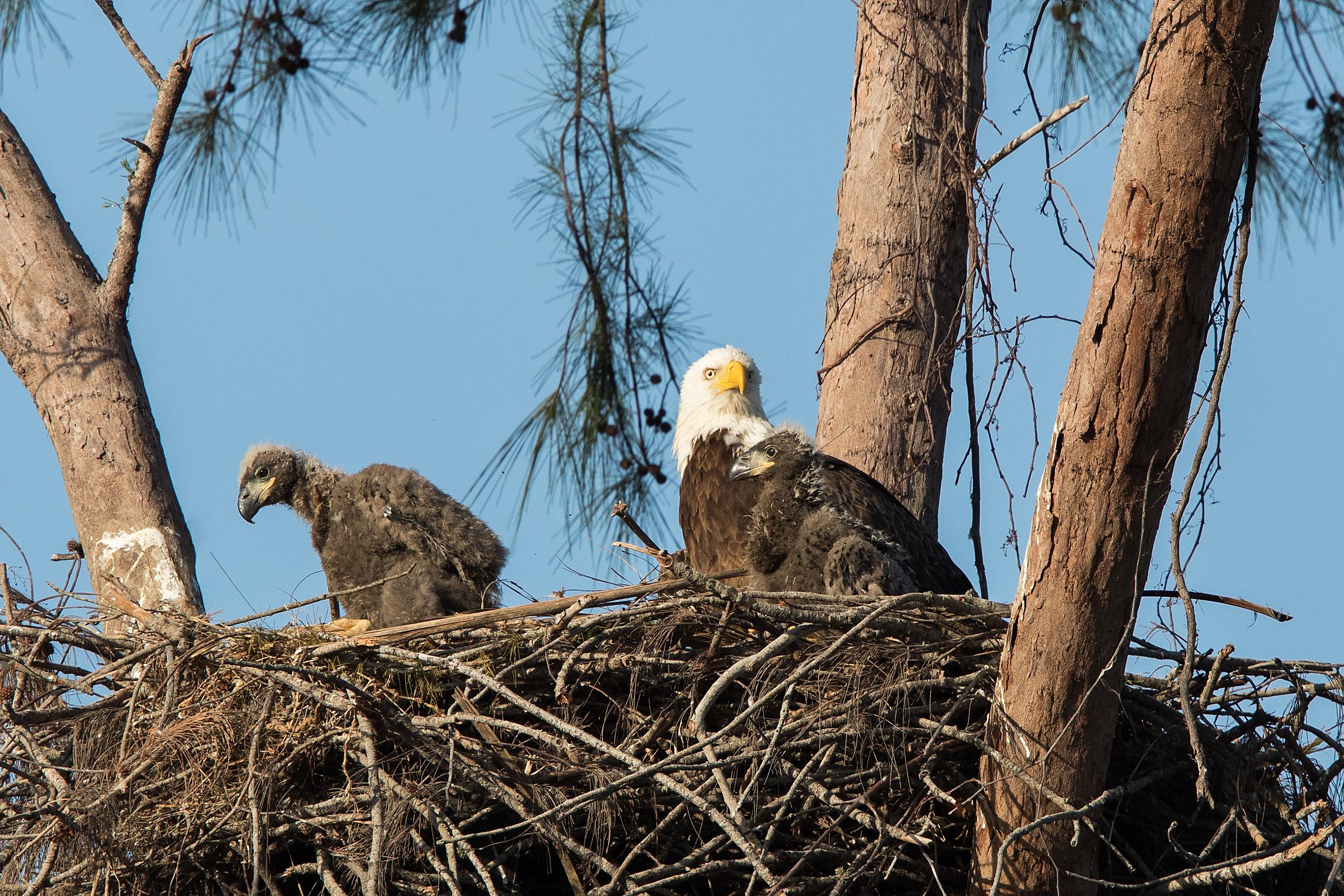 Live Eagle Camera